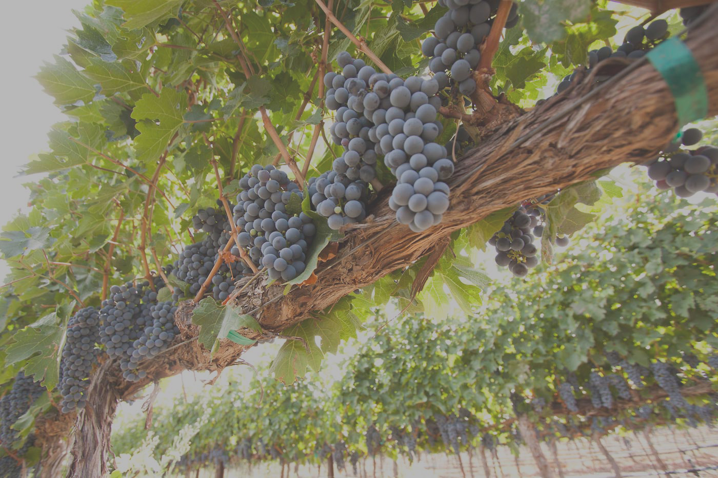 Home doffo wines for Paint and wine temecula